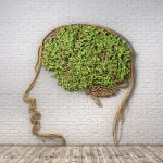 The green plant in form of human head with brain on a brick wall background and wood floor. Thought breaks out. 3d illustration
