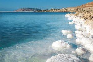 Dead Sea Moringa